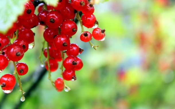 red_currant_in_focus-1280x800
